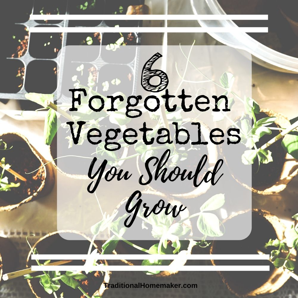 Here are some forgotten garden vegetables you should grow to help expand your family's flavor pallet. A garden is a frugal, fun way to taste new foods!